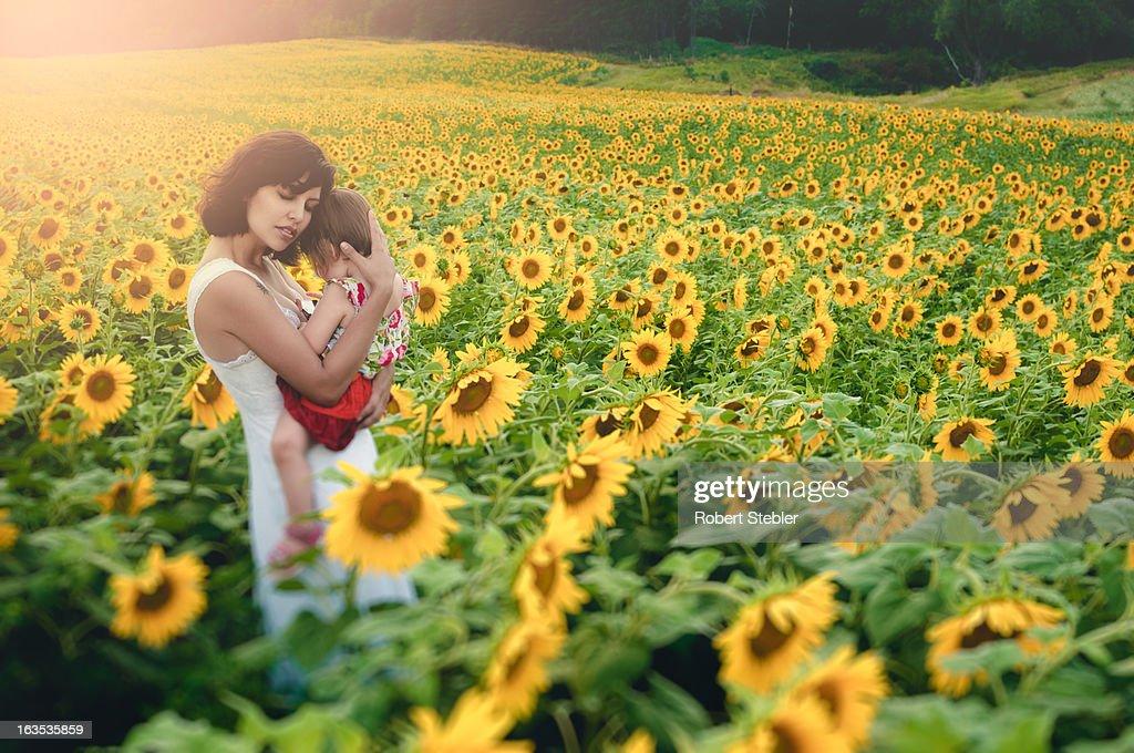Sunflower Love : Stock Photo