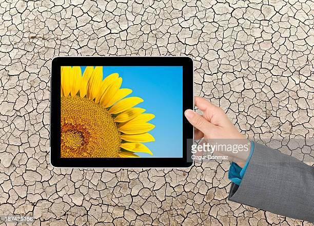 Sunflower on a tablet PC