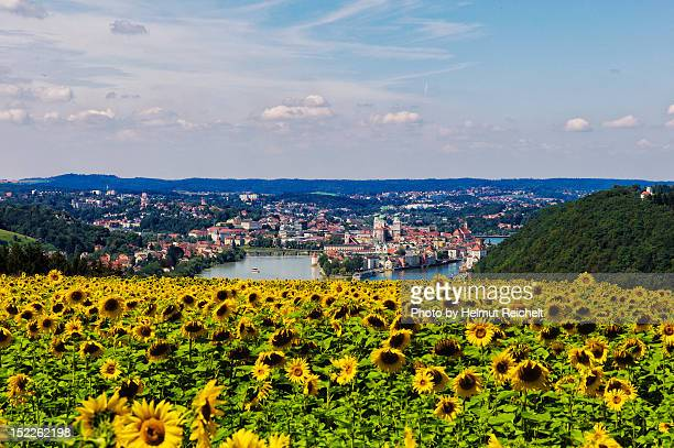 Sunflower over city