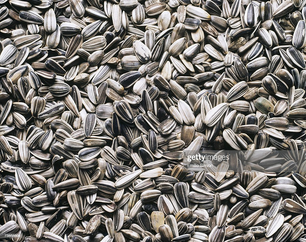 Sunflower seeds, close-up