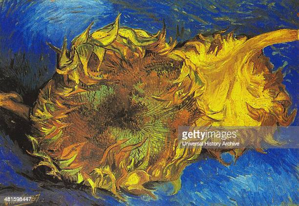 Sunflowers 1887 Vincent van Gogh MoMA