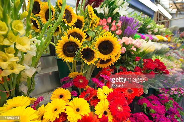 Sunflowers For Sale at Flower Market Stand New York City