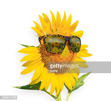 Sunflowers glasses, isolated on white Background, Summer Time : Stock Photo