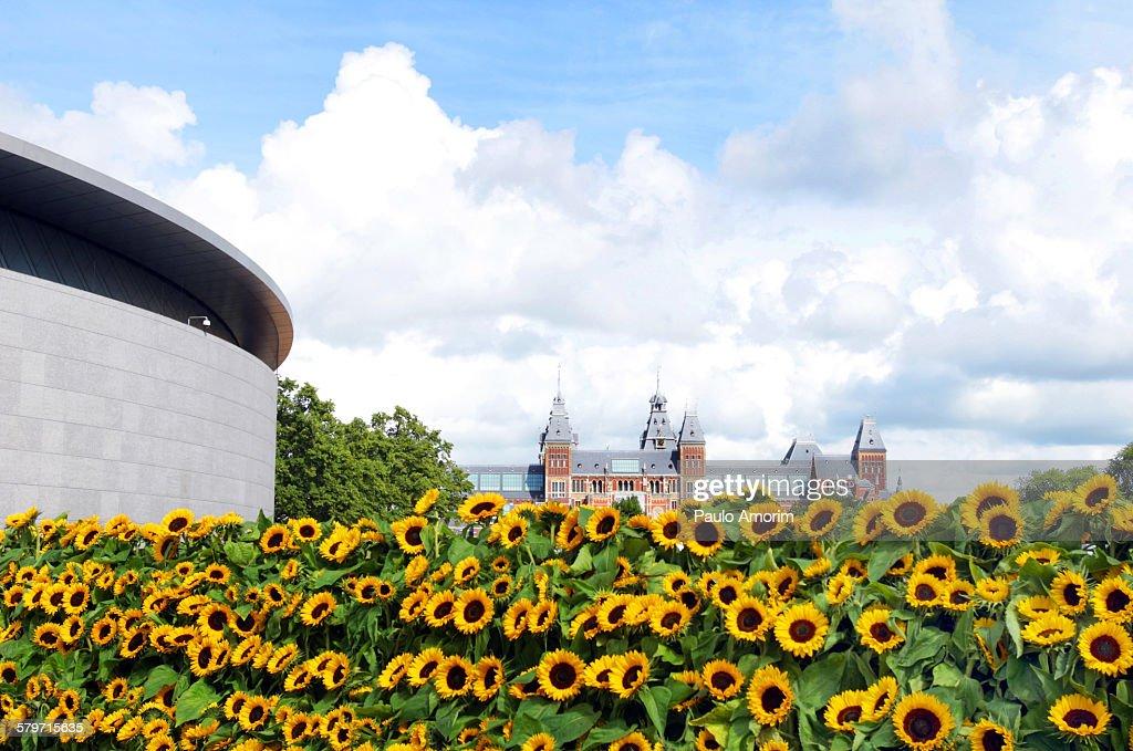 Sunflowers in Amsterdam