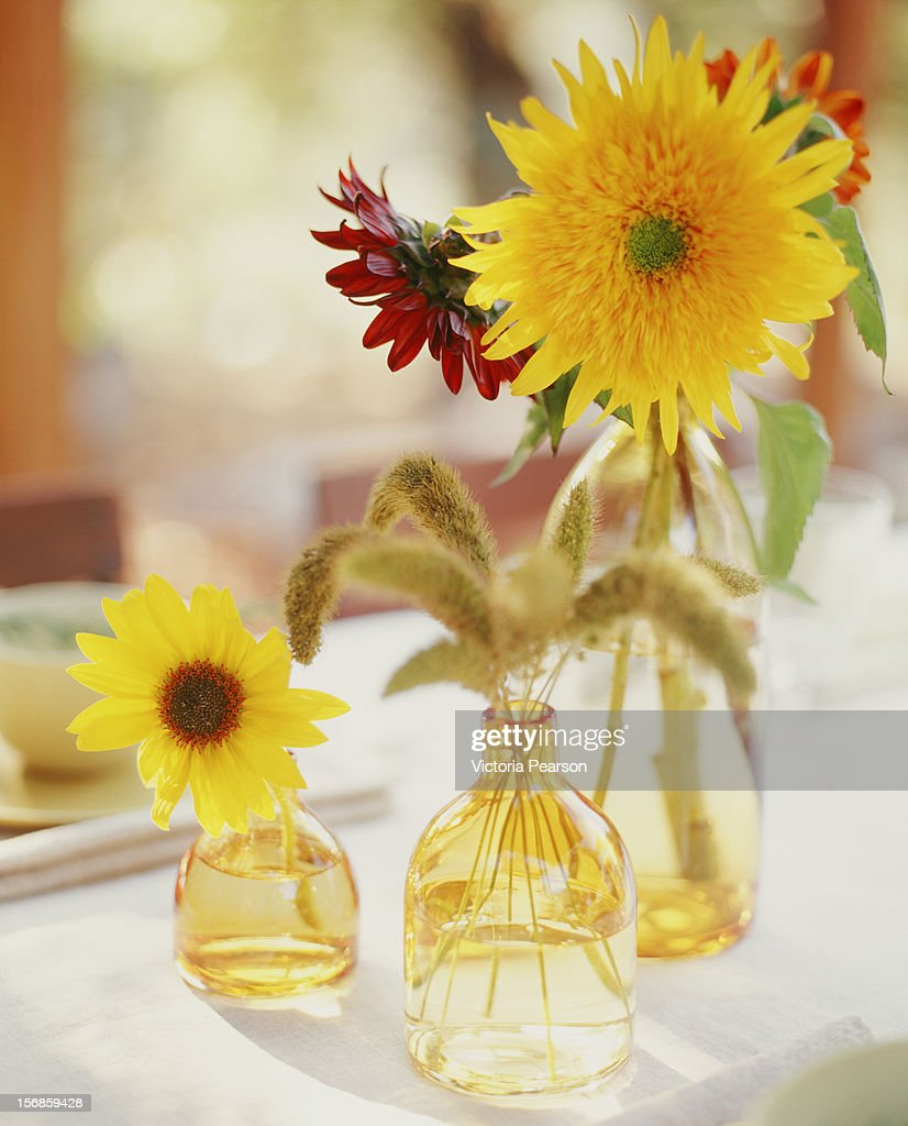 Sunflowers in clear glass yellow vases. : Stock Photo