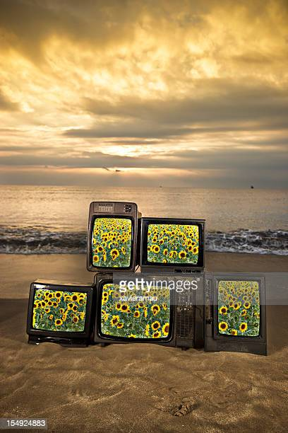 Sunflowers televisions