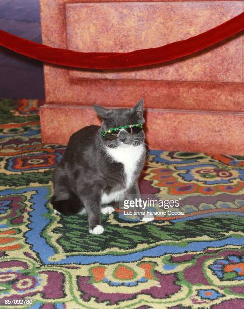Sunglass Cat attends Red Walk special screening of Disney's 'Beauty And The Beast' at El Capitan Theatre on March 23 2017 in Los Angeles California