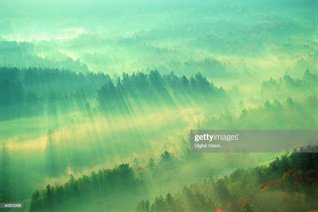 Sunirse over Forest, Stowe, Vermont, USA,