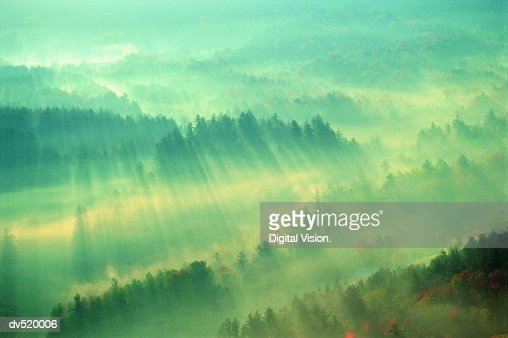 Sunirse over Forest, Stowe, Vermont, USA, : Foto de stock