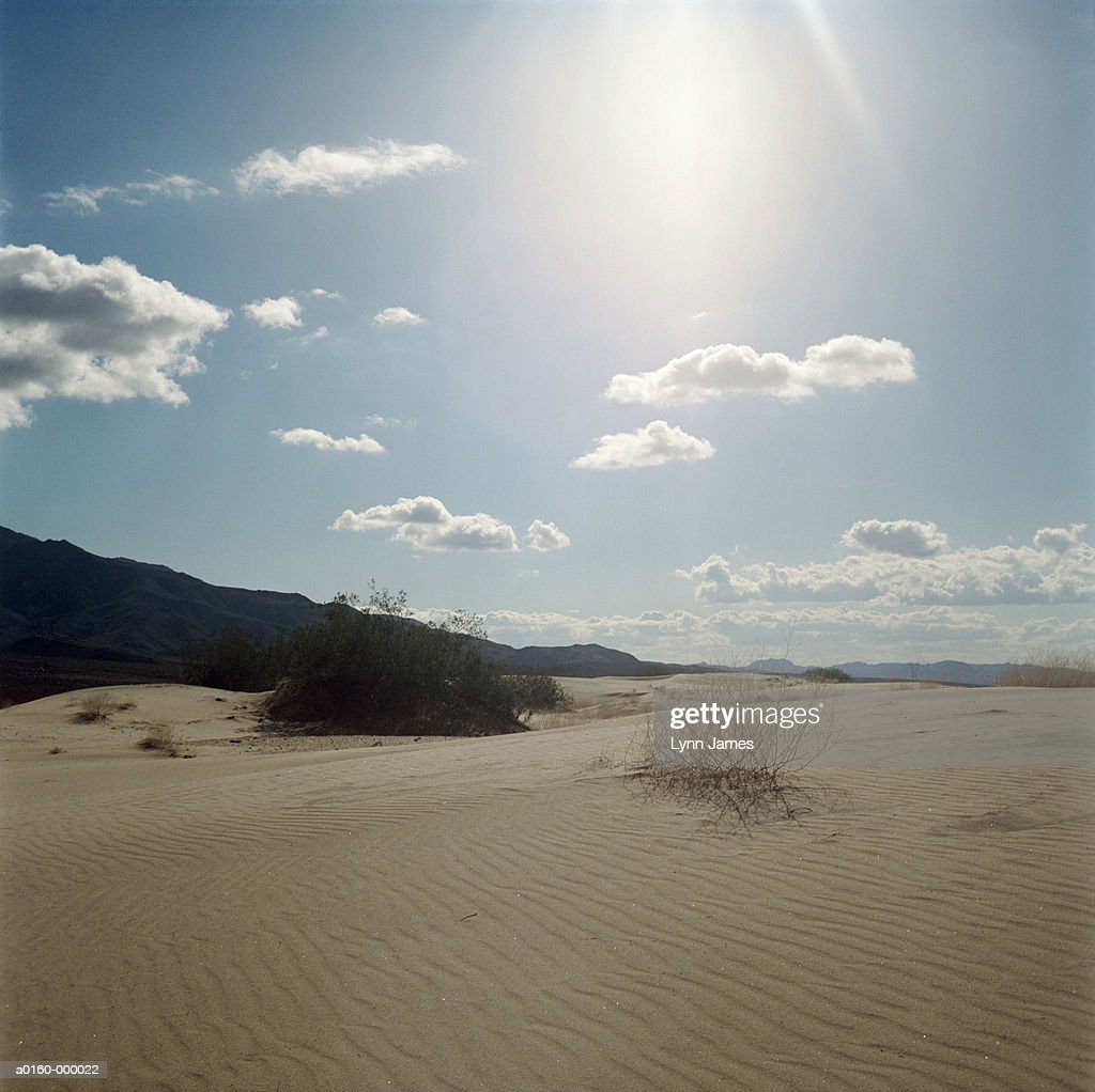 Mojave Desert Native Plants: Sunlight Above Mojave Desert Stock Photo