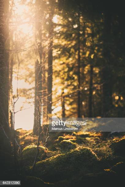 Sunlight at the edge of the forest