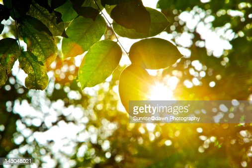 Sunlight beaming through tree leaves