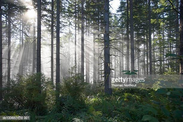 Sunlight breaking through misty forest