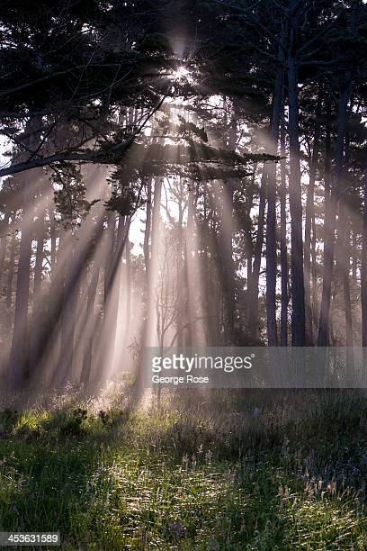 Sunlight burns through the fog near the Mendocino Coast Botanical Gardens on September 7 in Fort Bragg California Located three hours north of San...