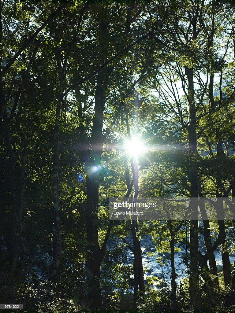 Sunlight bursting through a forest canopy : Stock Photo