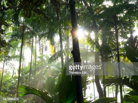 Sunlight bursting through rainforest canopy : Stock Photo