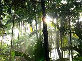 Sunlight bursting through rainforest canopy