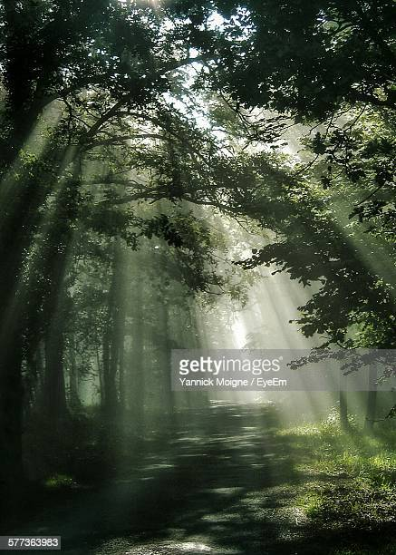 Sunlight Falling On Street Amidst Trees In Forest
