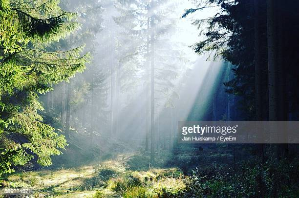 Sunlight Falling On Trees In Forest On Sunny Day