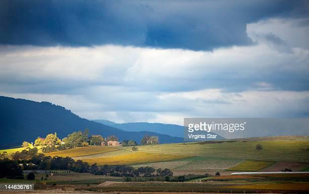Sunlight falling on winery vineyards
