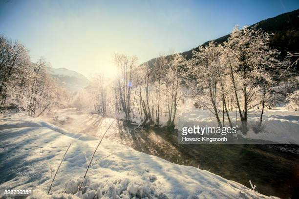sunlight filtering through trees in snow covered landscape