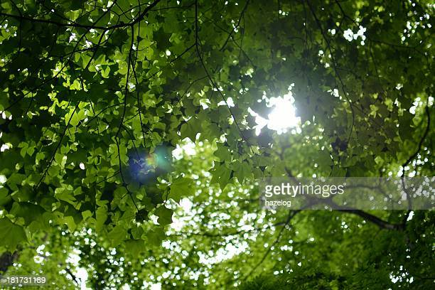 sunlight filtering through trees, with lens flare.
