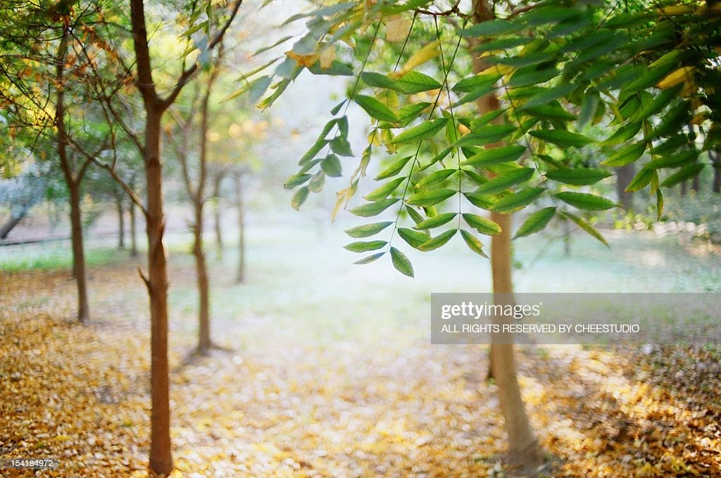 sunlight in the forest : Stock Photo