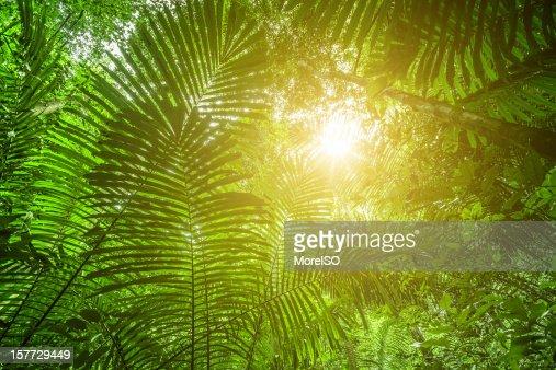 Sunlight in the Rainforest