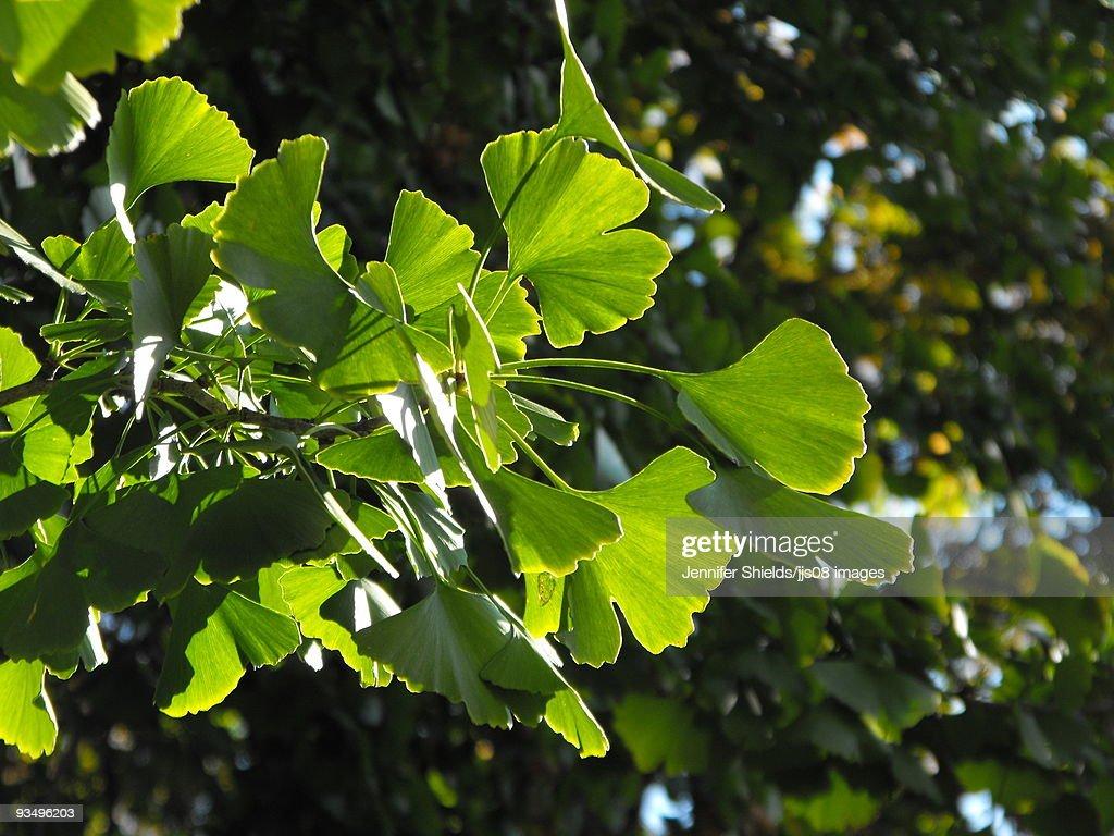 Sunlight on leaves