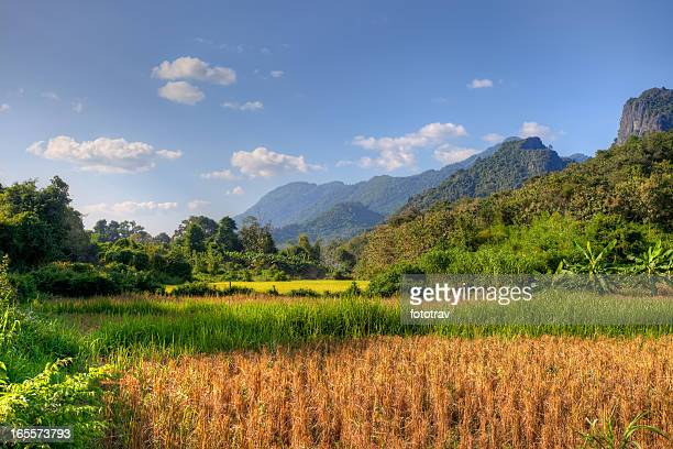 Sunlight on paddy field in Laos