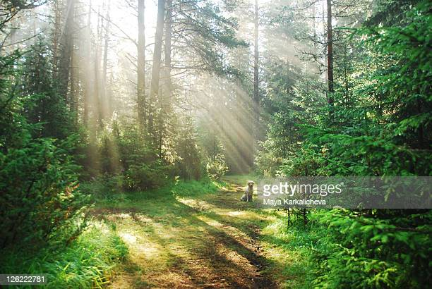 Sunlight on path in forest