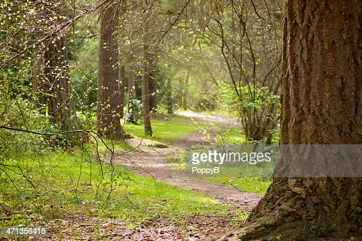 Sunlight on Path Through Large Trees in Early Spring