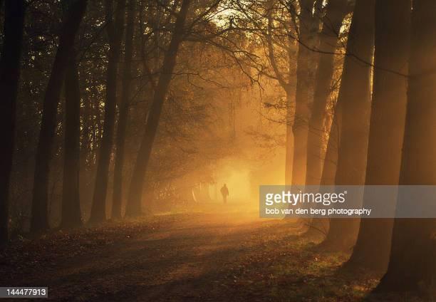 Sunlight passing through trees in autumn