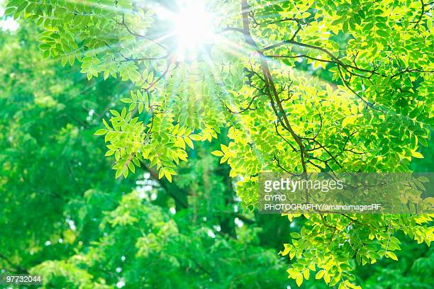 Sunlight shining through tree canopy