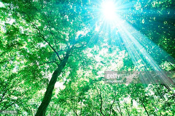 Sunlight shining through trees in forest, low angle view