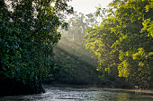 Sunlight shining through trees on river in Amazon rainforest