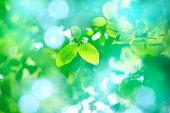 Sunlight shining through trees onto green leaves