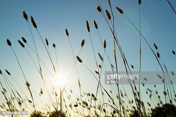 Sunlight shining through wild grass