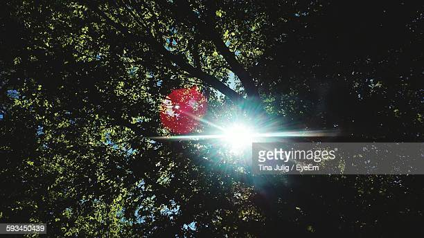 Sunlight Streaming Through Tree In Forest
