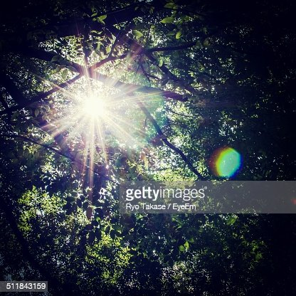 Sunlight streaming through trees forest