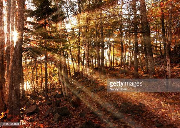 Sunlight through autumn forest
