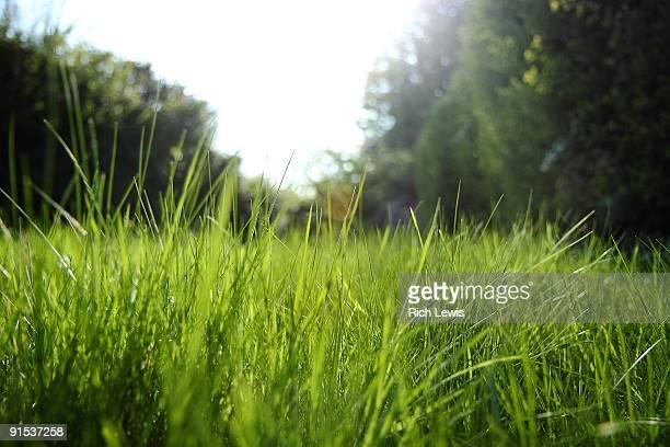 Sunlight Through Long Grass