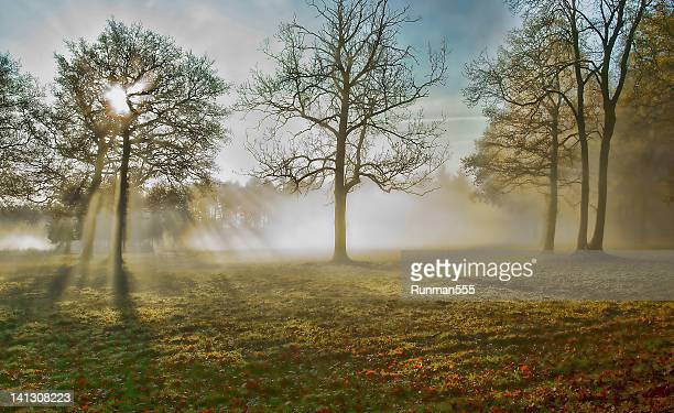 Sunlight through trees and mist