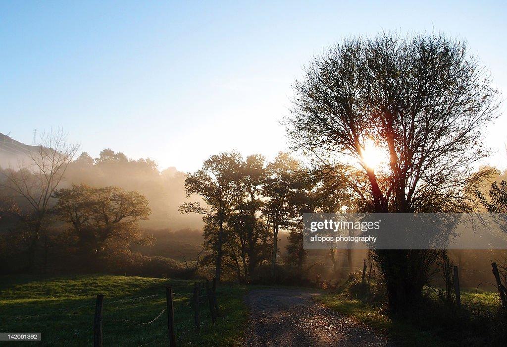 Sunlight through trees : Stock Photo