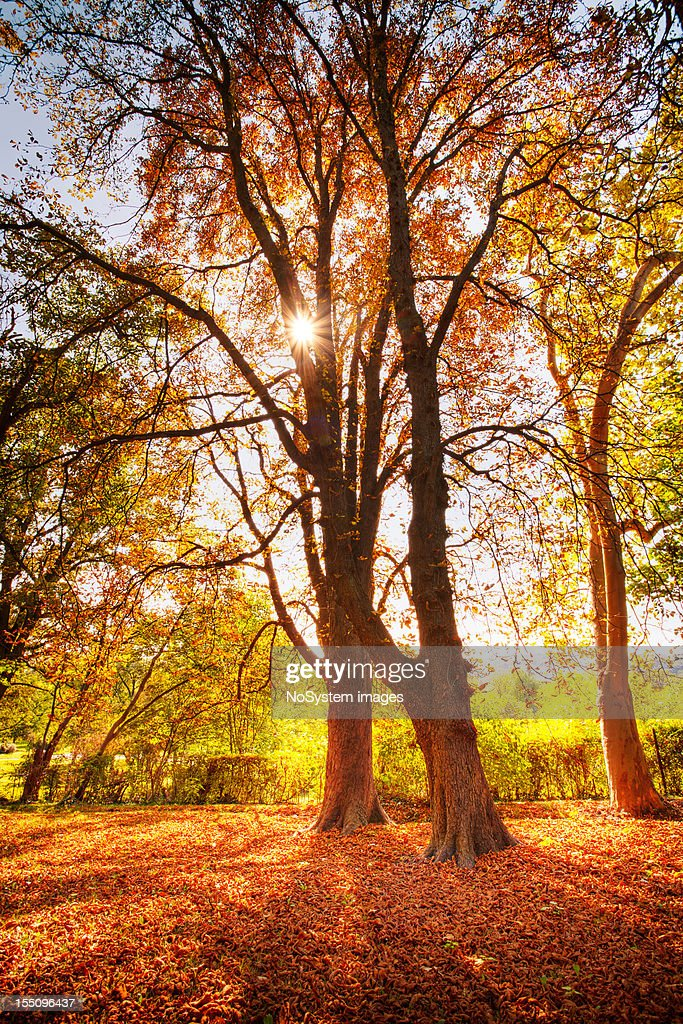Sunlighted yellow autumn tree in a forest : Stock Photo