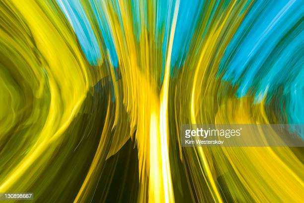 Sunlit forest edge, abstract blurred motion