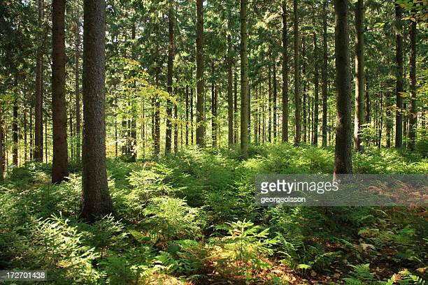 Sunlit Forest Interior