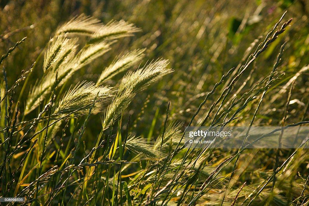 Sunlit grass : Foto de stock