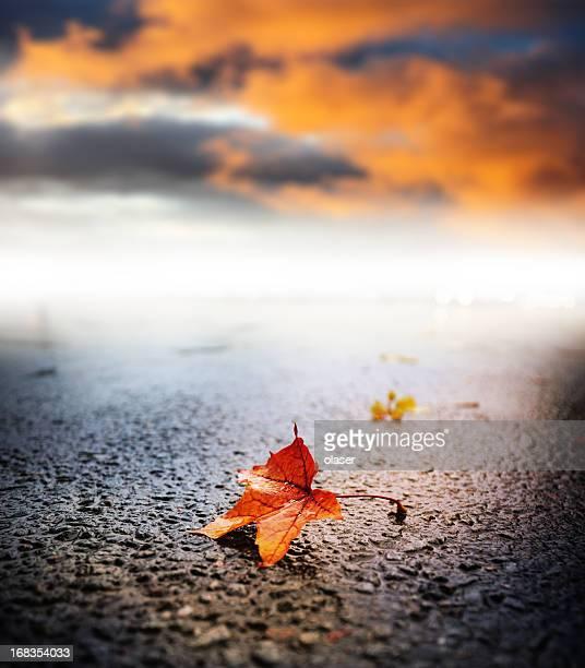 Sonnige Wetter Regen Herbst Blatt auf asphalt