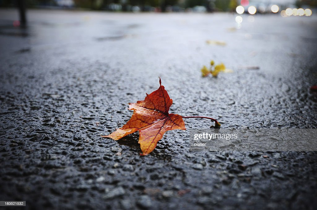 Sunlit rain wet autumn leaf on asphalt
